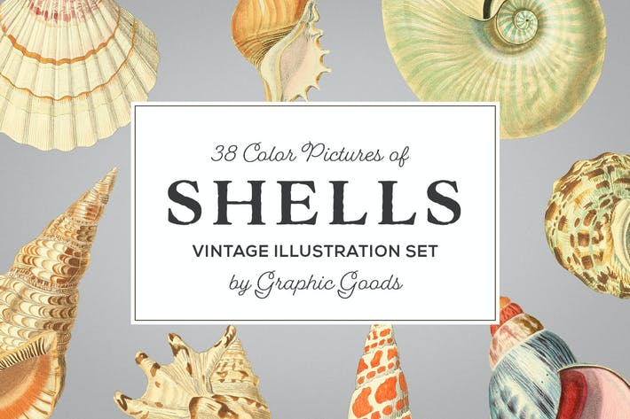 Thumbnail for Shells - Vintage Color Illustrations
