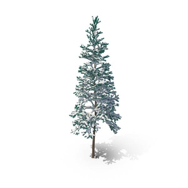 Nadelbaum mit Schnee bedeckt