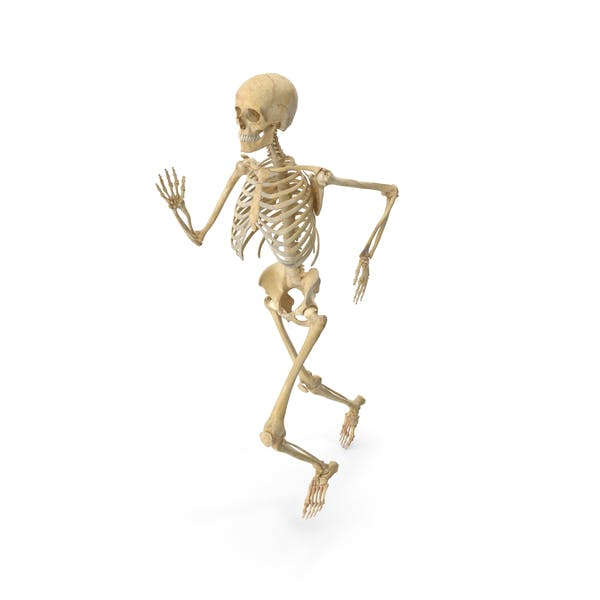 Real Human Female Skeleton Running