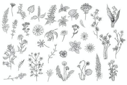 Kräuter und Blumen