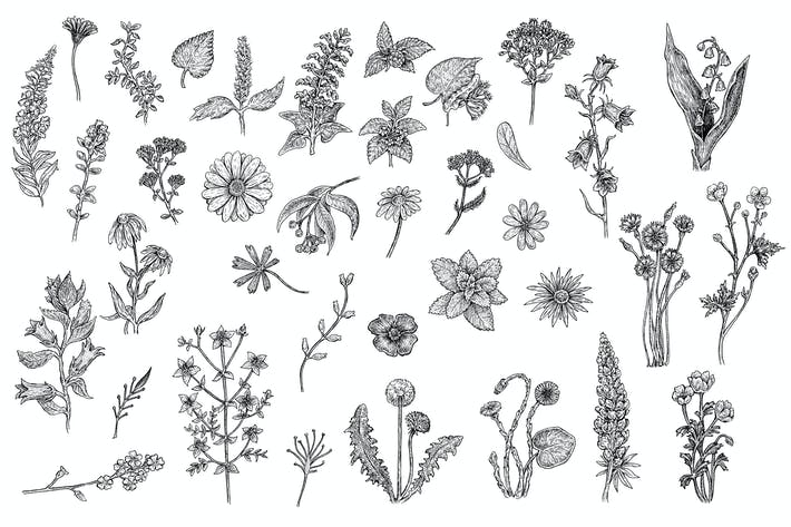 Thumbnail for Herbs and Flowers