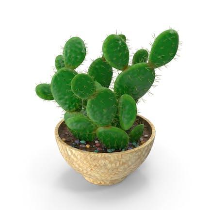 Kaktus-Multi-Topf