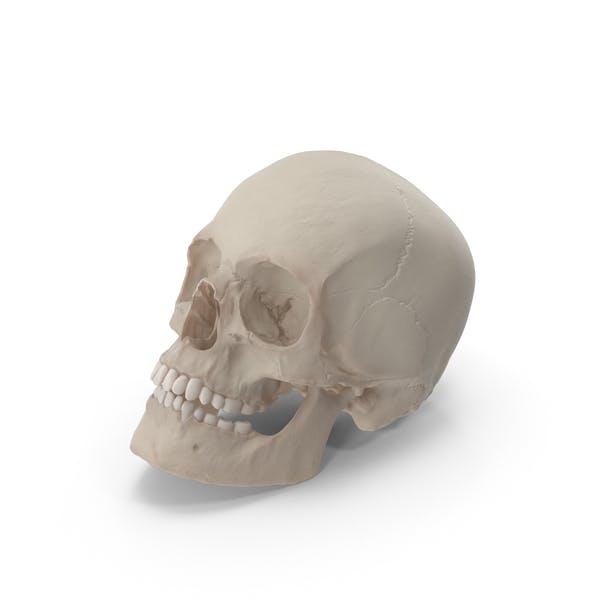 Skull Resting