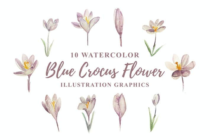 Cover Image For 10 Watercolor Blue Crocus Flowers Illustration