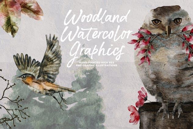 Woodland Watercolor Graphics