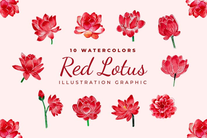 Rote Lotusblüten Aquarell