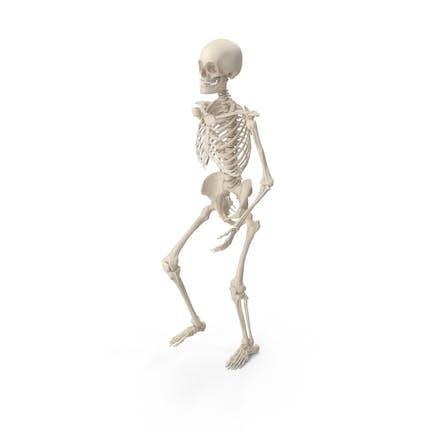 Skelett Treppen