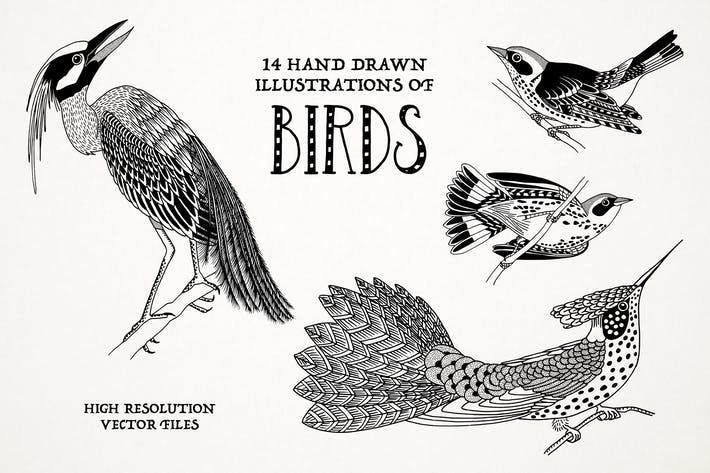 Thumbnail for Hand Drawn Illustrations Of Birds
