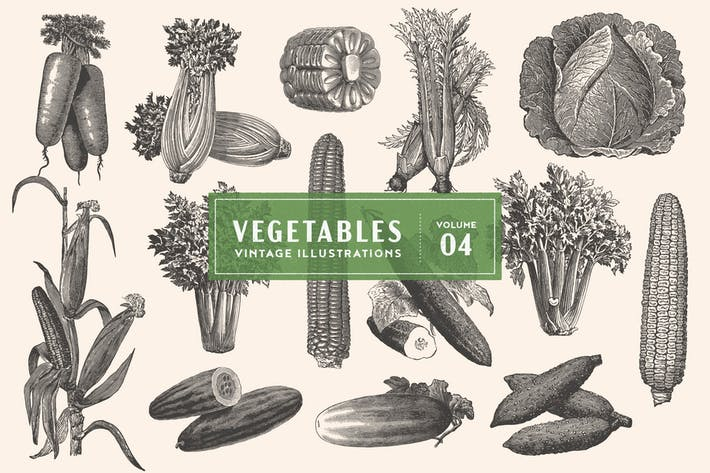 Thumbnail for Vintage Vegetable Illustrations Vol. 4