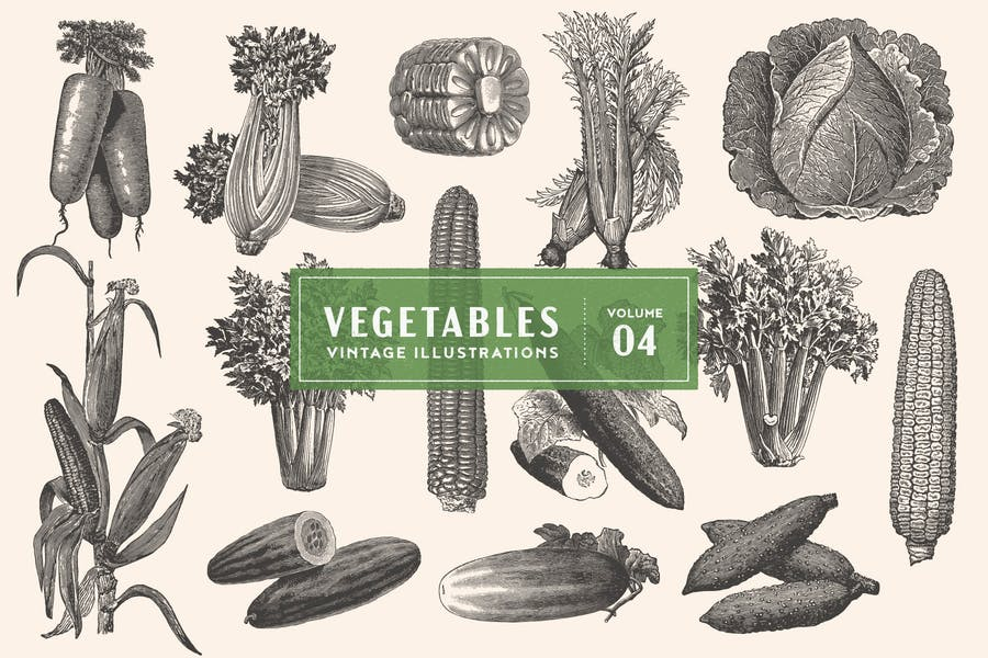 Vintage Vegetable Illustrations Vol. 4