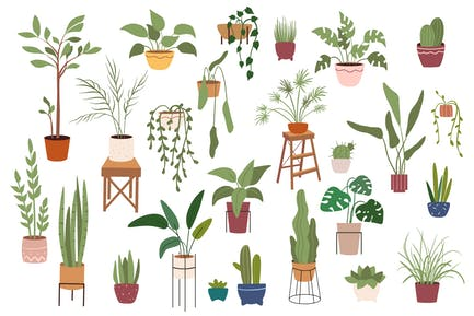 Home Plants In Pots Set Isolated Elements