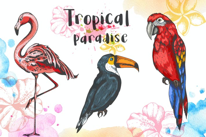 Thumbnail for Tropical Birds