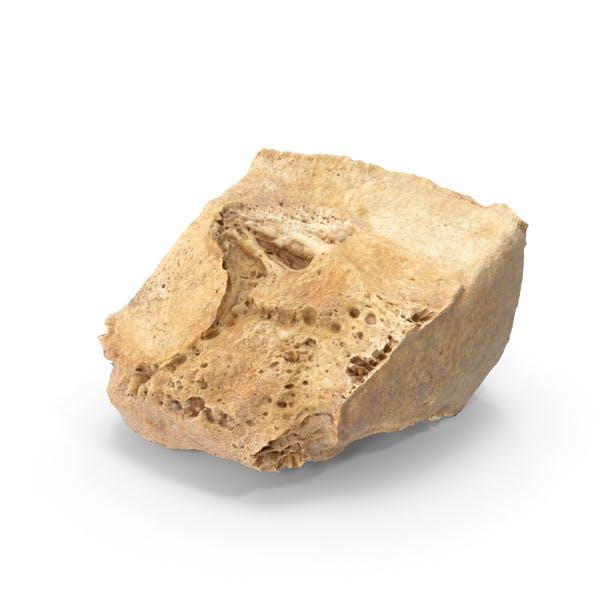 Lateral Cuneiform Bone