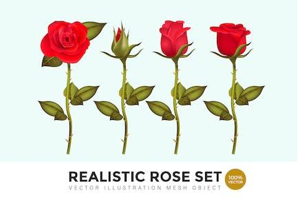 Realistic Rose Set Vector Mesh Illustration