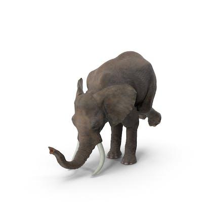 Elefant Zirkus Trick