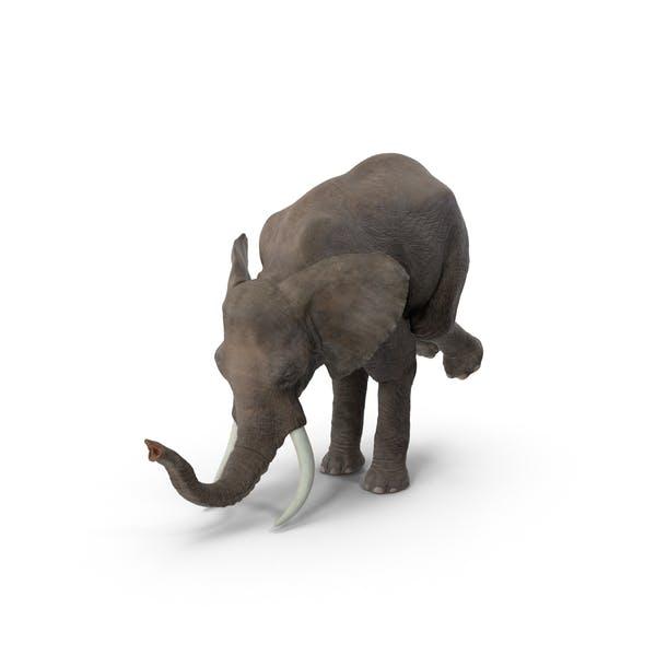 Elephant Circus Trick