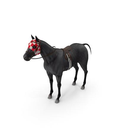Racehorse Black