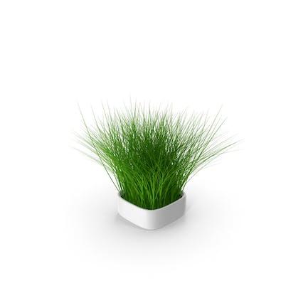 Pflanze im quadratischen Topf