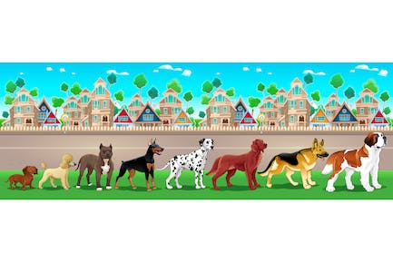 Collection of Purebred Dogs