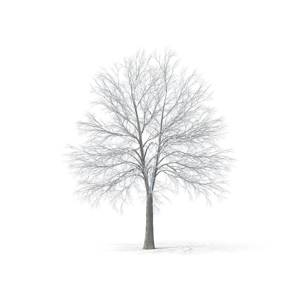 Thumbnail for Головое дерево