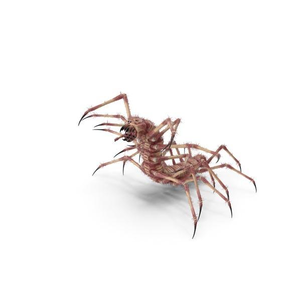 Monster Centipede