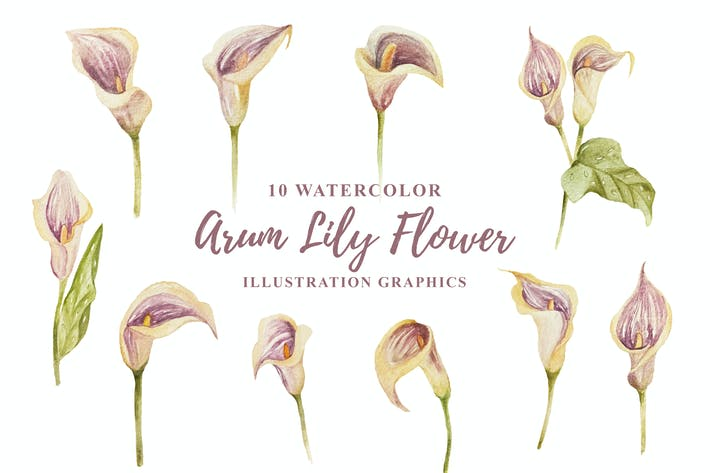Thumbnail for 10 Watercolor Arum Lily Flower Illustration