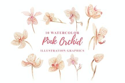 10 Aquarell Rosa Orchidee Illustration Grafiken
