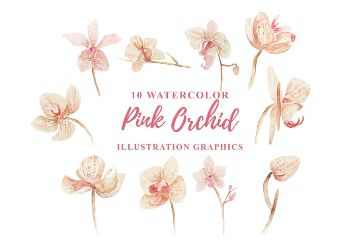 Thumbnail for 10 Watercolor Pink Orchid Illustration Graphics