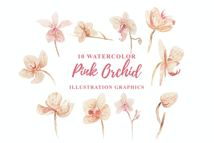 10 Watercolor Pink Orchid Illustration Graphics