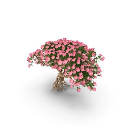 Miniatur-Bonsai-Baum mit Blumen