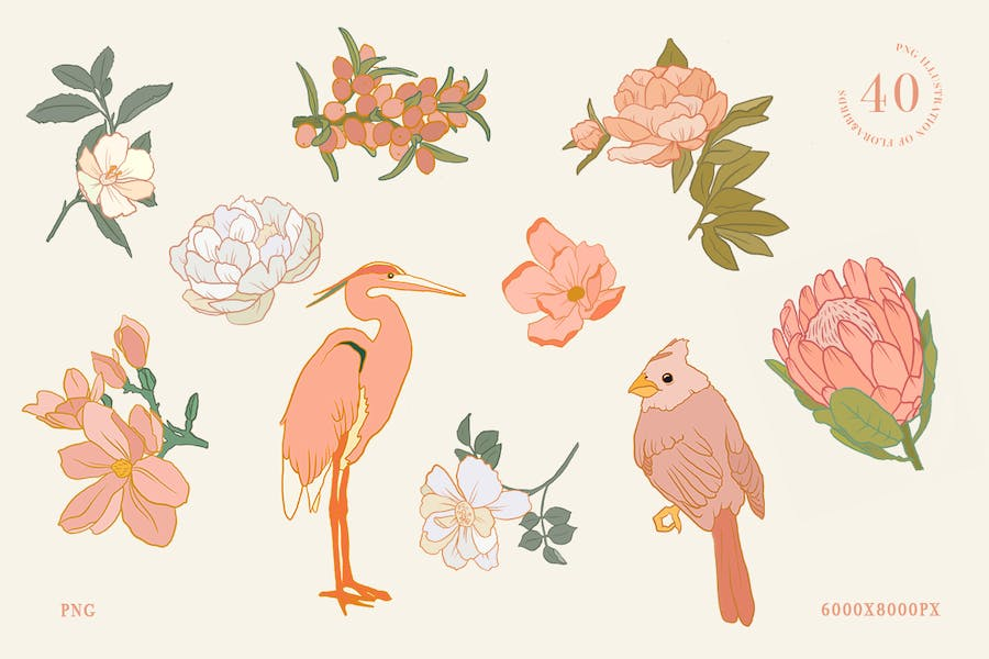 40 Floral and Birds Illustrations