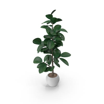 New Potted Plant