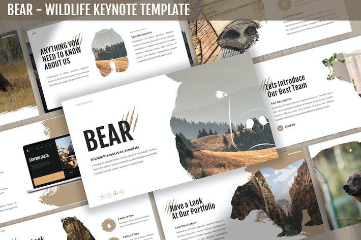 Thumbnail for Bear - Wildlife Keynote Template