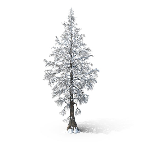 Bare Snow Tree