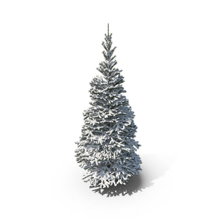 Snow Covered Conifer Tree