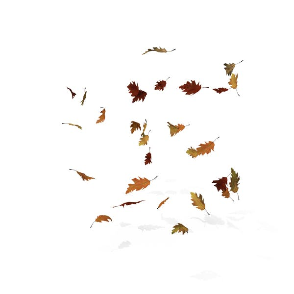 Thumbnail for Fall Oak Leaves