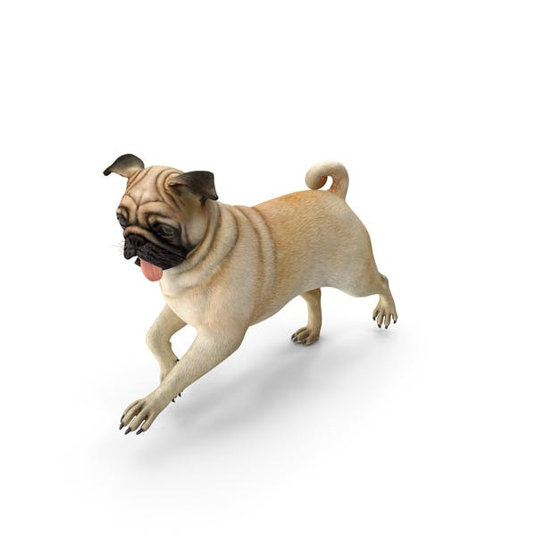 Pug Dog Running Pose