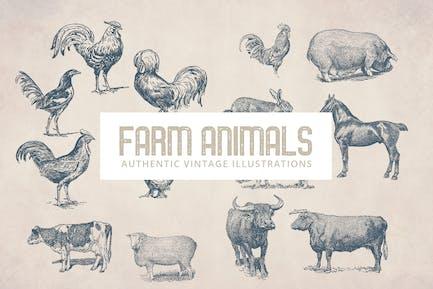 Vintage Bauernhoftiere Illustrationen