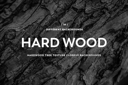 Hardwood Tree Texture Closeup Backgrounds