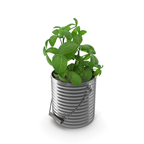 Cover Image for Basil Plant