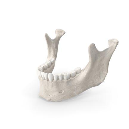 La mandíbula de la mujer humana
