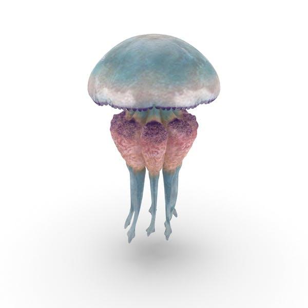 Thumbnail for Jellyfish