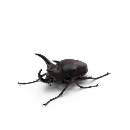 Nashörner Käfer