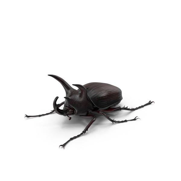 Cover Image for Rhinoceros Beetle