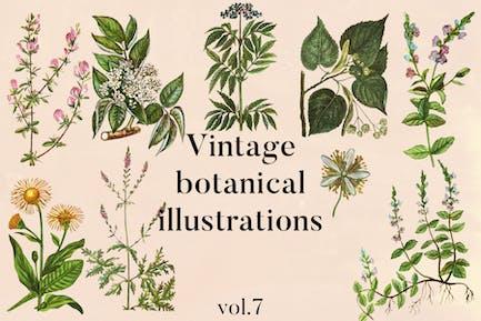 Vintage Botanical Illustrations Vol. 7