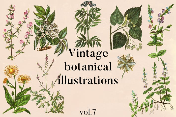 Thumbnail for Vintage botanische Illustrationen Vol. 7