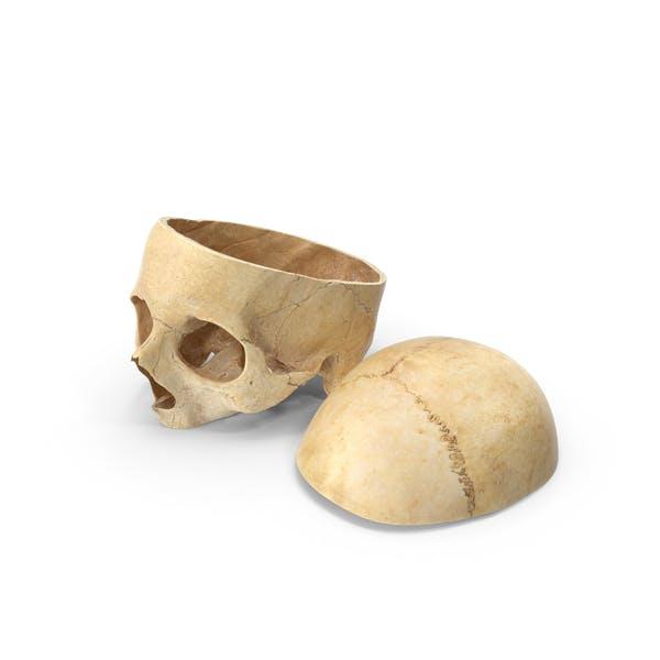 Человеческий череп вырезанный с кусочек