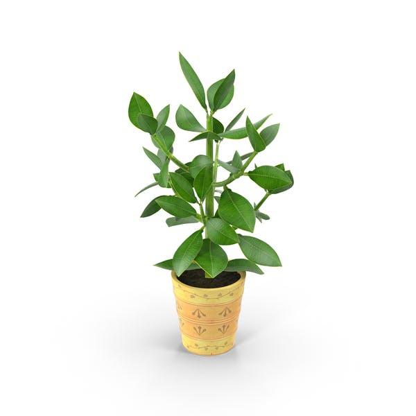 Small Tree in Planter