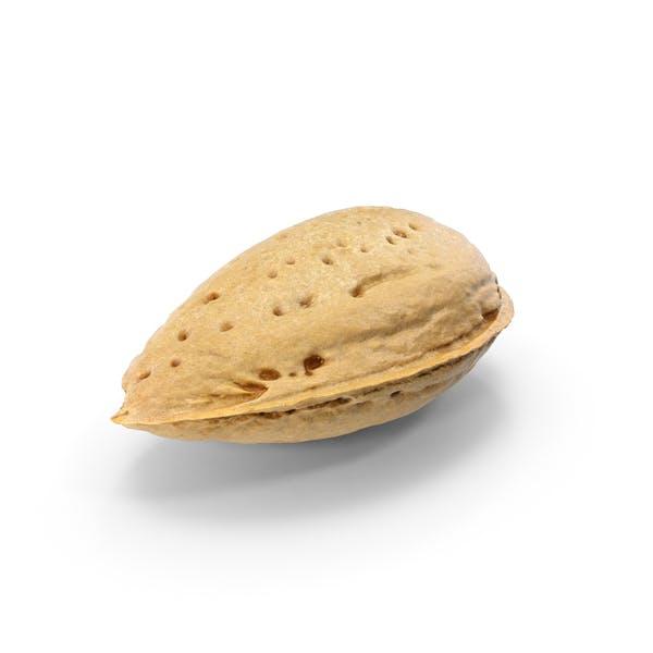 Thumbnail for Almond