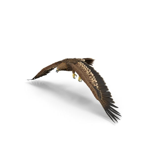 Imperial Eagle Flapping